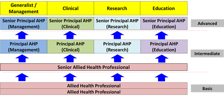 AHP Career track.png